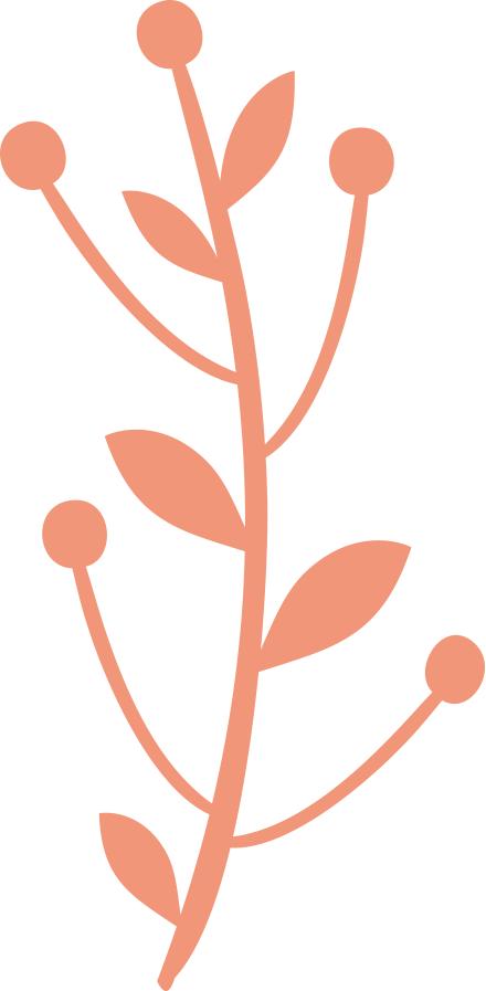 flower illustrations 02